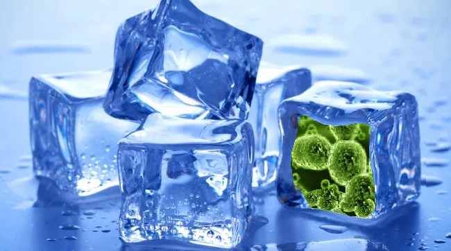 Ice machines may host Bacteria Colonies
